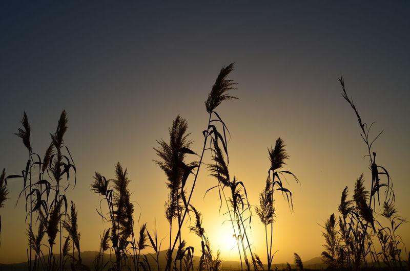 Amazing Scenery Amazing View Amazing Sardinia Beauty In Nature Cereal Plant Clear Sky Close-up Day Field Growth Nature No People Outdoors Plant Scenics Silhouette Sky Sunset Tranquil Scene Tranquility