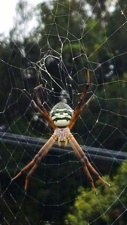 Nature Photography Spider Spiderweb