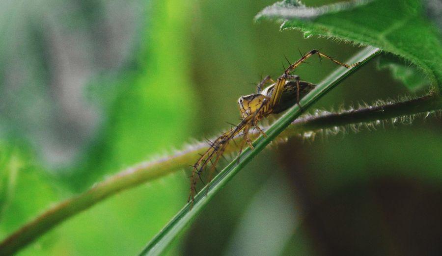 Spider. Leaf