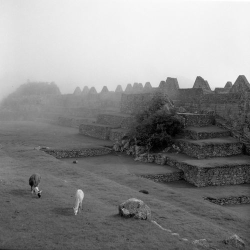 machu picchu by Rolleiflex 3.5f/ fujifilm acros 100 Ancient Ancient Architecture Ancient Civilization Ancient Ruins The Great Outdoors - 2016 EyeEm Awards Black And White Blackandwhite Blackandwhite Photography Film Film Photography Filmcamera Fujifilm Heritage Landscape Landscape_Collection Machu Picchu Misty Misty Morning Mountain Nature Rolleiflex Sky Tranquil Scene Tranquility World Heritage