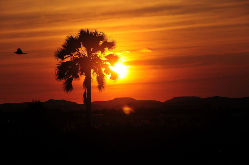 Palm Tree Sunset Beauty In Nature Sky Silhouette Scenics - Nature Orange Color Plant Tranquil Scene Tranquility Nature Cloud - Sky No People Mountain Environment Idyllic Landscape Land Outdoors Sunlight Non-urban Scene