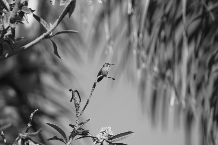 Hummingbird perching on a tree