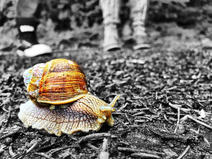 Snail Macro Macro_collection Nature Nature_collection Check This Out Small Blackandwhite Black And White Black & White