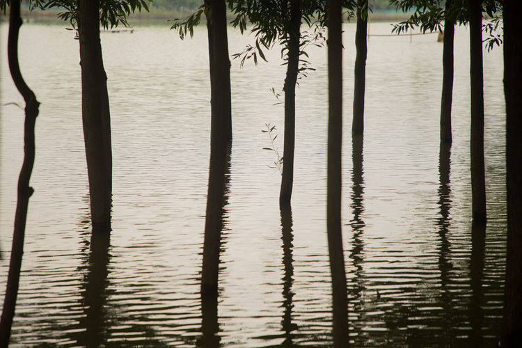 Reflection of palm trees in lake