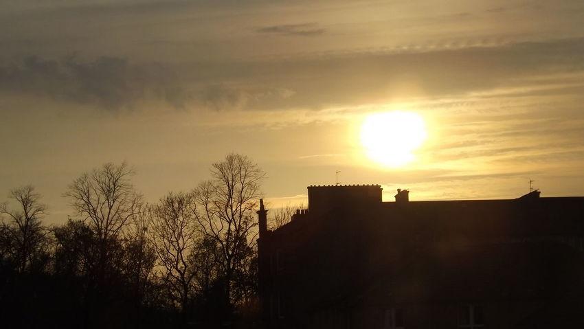 Cloud - Sky Golden Colours Landscape_photography Lens Flare Sun Sky Sun Sunlight Sunset Tree
