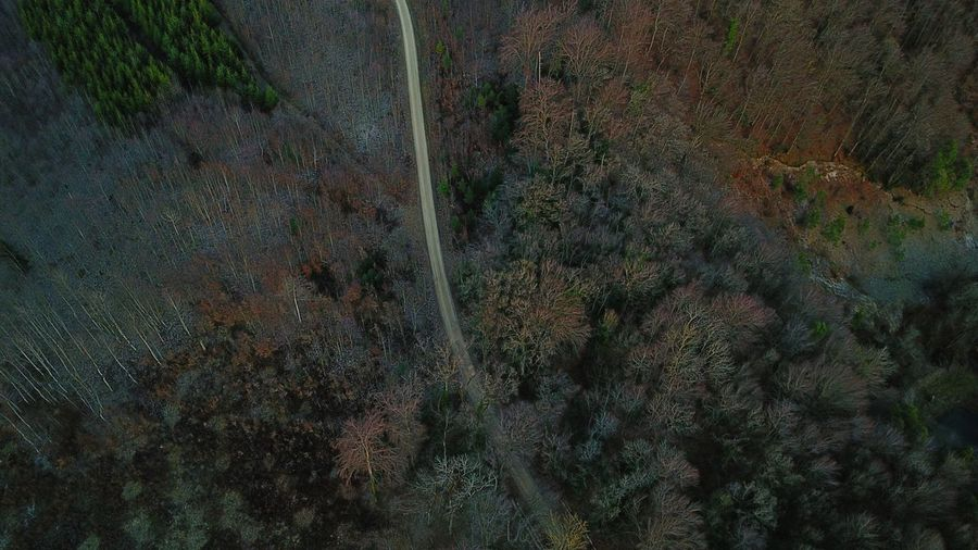 Aerial view of country road amidst trees in forest