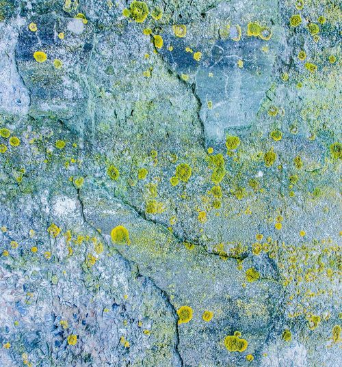 Abstract Backgrounds Abstract Pattern Backgrounds Beauty In Nature Biological Diversity Blue Blue Sky Botanical Close-up Lichen Lichen On Stone Mycology Natural Pattern No People Outdoors Pattern Rock Textured  Wall - Building Feature Weathered Yellow