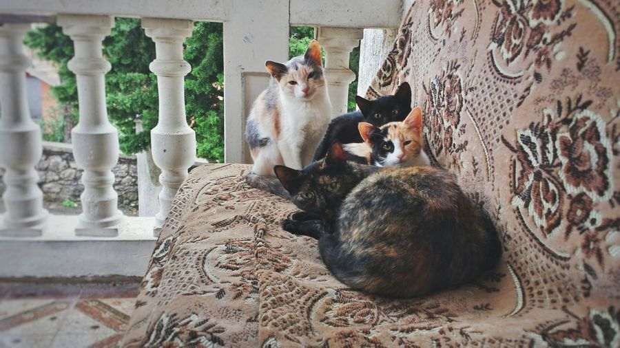 View Of Cats On Sofa