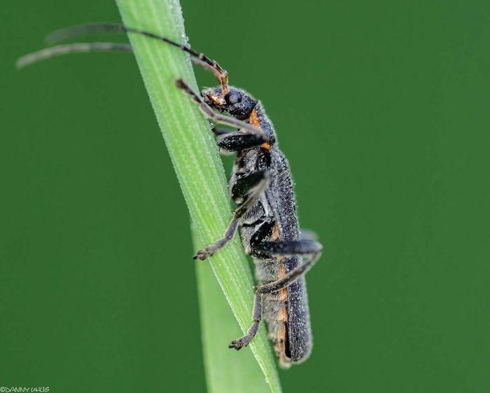 #macrophotography #MacroShot Insect Close-up Animal Themes Animals Mating Leaf Vein Female Animal