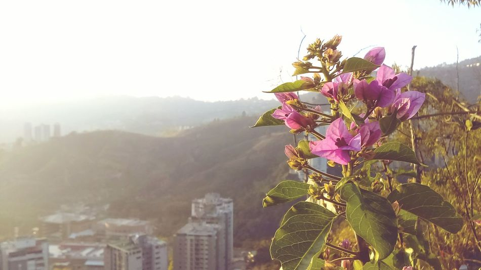 Flower Pink Color Nature Springtime No People Outdoors Plant Day Beauty In Nature Freshness City Sky Vacations Mountain Landscape Climbing Tree Fragility Close-up Flower Head