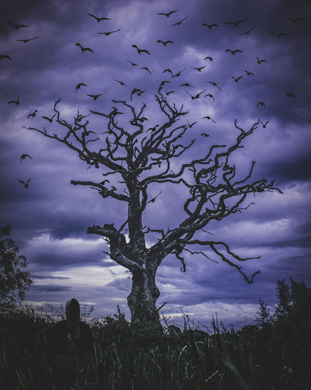 Nightmare Beauty In Nature Cloud - Sky Dusk Environment Field Growth Land Low Angle View Nature No People Non-urban Scene Outdoors Plant Scenics - Nature Silhouette Sky Tranquil Scene Tranquility Tree