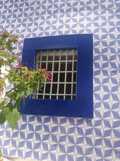 Flower Window Window Box Architecture Building Exterior Plant Built Structure