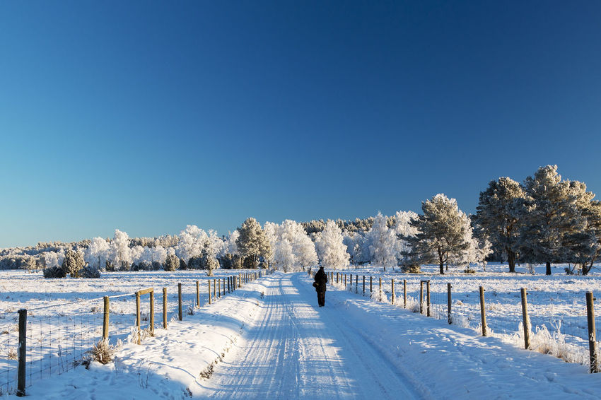 Exceptional Photographs Wintertime Beauty In Nature Blue Clear Sky Cold Temperature Copy Space Day Frozen Landscape Nature Outdoors Scenics Sky Snow Snowing Sunlight The Way Forward Tranquil Scene Tranquility Tree Weather White Color Winter Winter Wonderland Colour Your Horizn