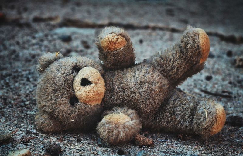 Close-up of abandoned teddy bear on road