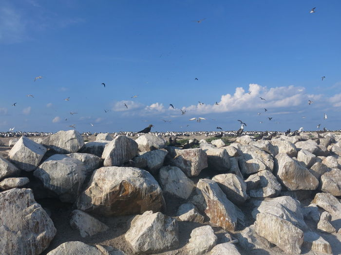 View of seagulls on rocks