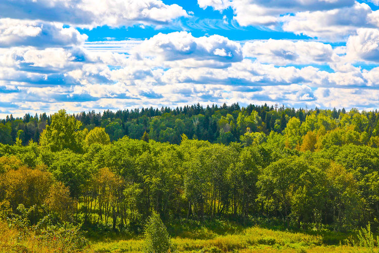 Scenic View Of Trees Growing On Field Against Cloudy Sky