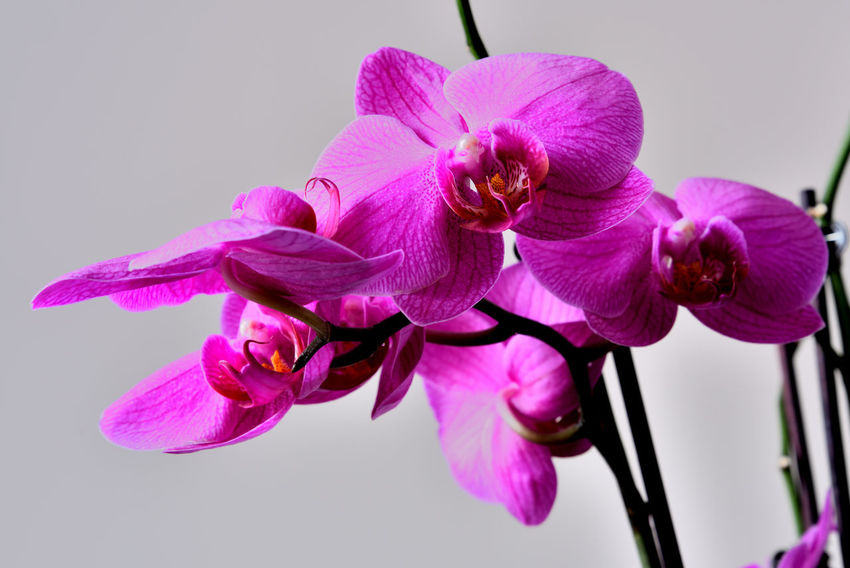 Orchids Close-up Fleurs Flowers Horticulture Indoors, Nature, Environmental, Organic Food Honey Kwiaty No People Storczyki Winter Flowers,