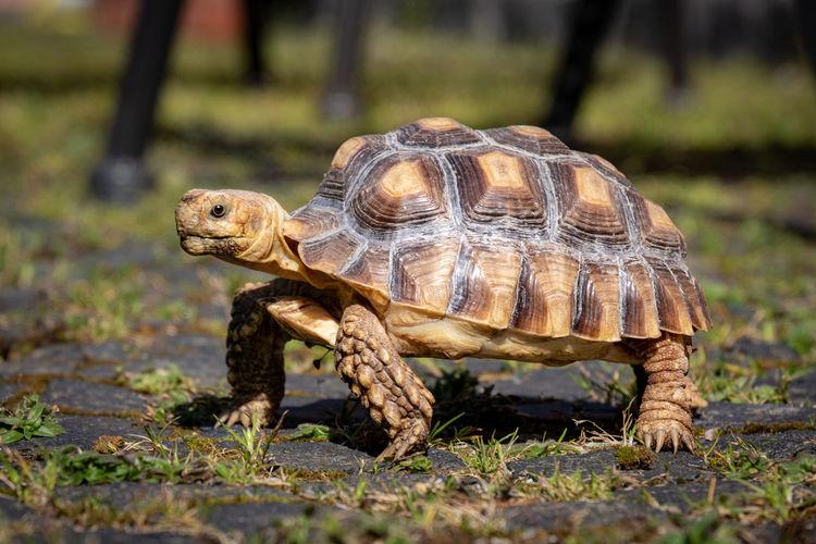 Close-up of tortoise on land