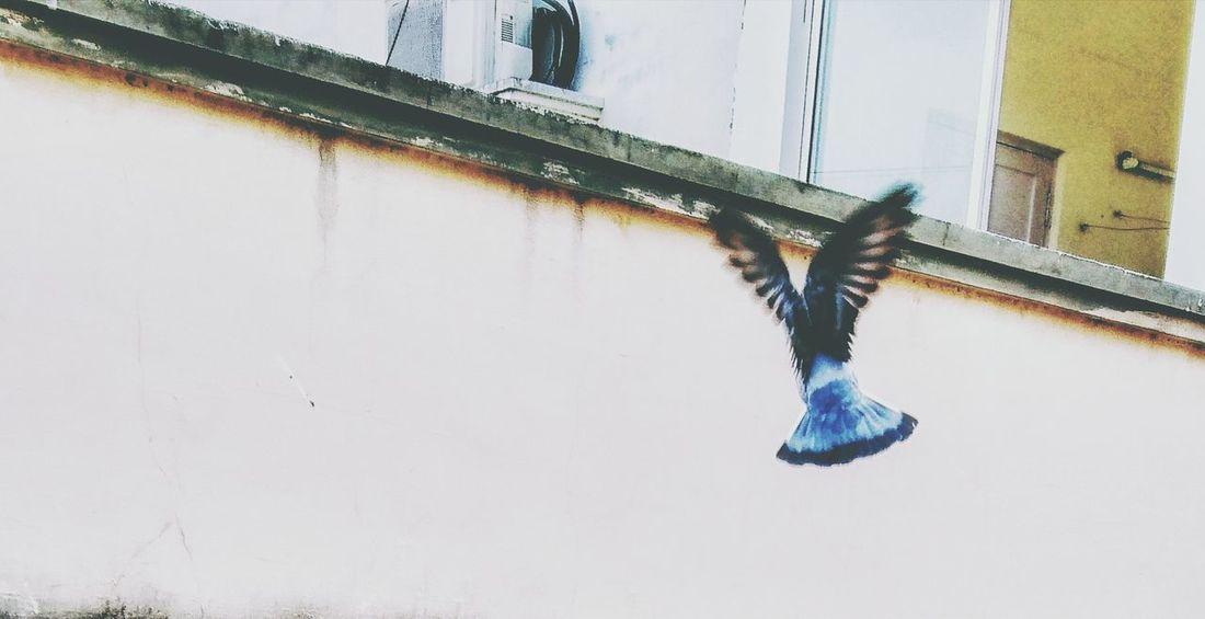 Sky Bird Pigeon Flight Wings XperiaZ5