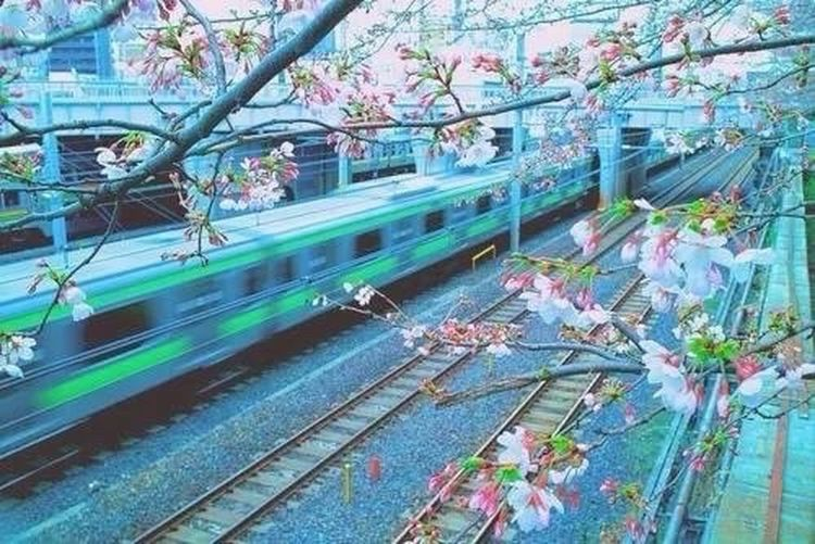 ? JR with Sakura Japan Sa ku r a Railway ? First Eyeem Photo