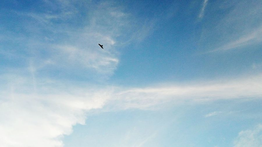 Blue Sky Flying Bird Mid-air Spread Wings Beauty In Nature Nature Your Ticket To Europe