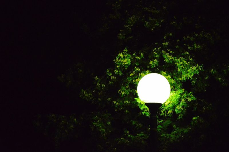 Low angle view of illuminated trees at night
