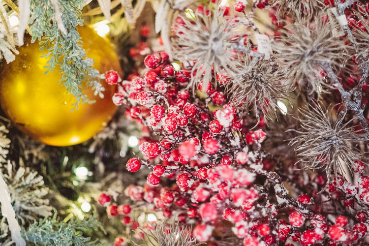 Selective Focus Flowering Plant Flower No People Plant Close-up Nature Day Celebration Beauty In Nature Holiday Freshness Decoration Outdoors Growth Tree Red Fragility Christmas Christmas Decoration Frost Frosty christmas tree Bauble