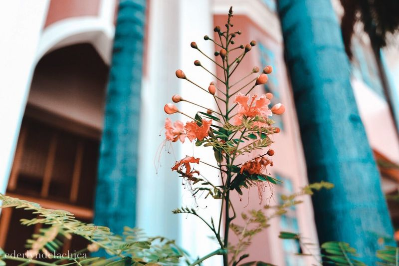 Building Exterior Built Structure Day Flower Architecture Outdoors Focus On Foreground Plant Low Angle View No People Close-up Growth Nature Tree