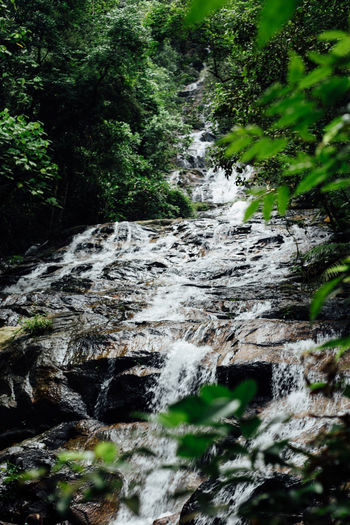 Beauty In Nature Forest Nature Non-urban Scene Outdoors Plant Scenics Stream Tranquil Scene Tranquility Tree Waterfall