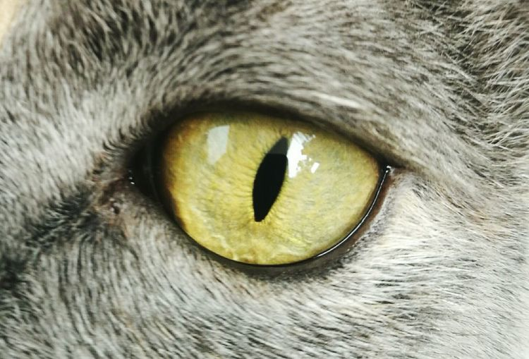 One Animal Domestic Animals Pets Domestic Cat Feline Mammal Animal Themes Animal Eye Looking No People Close-up Animal Nature Fauna Outdoors Yellow Eyes Day Cats Cat Lovers Cats Of EyeEm Cats 🐱