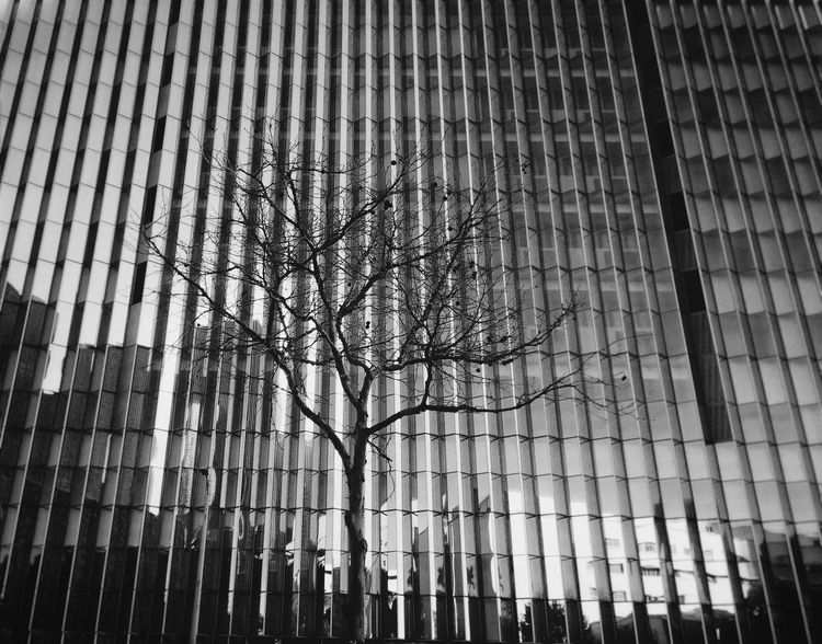 Streetphotography Building Exterior Tree Deviantart Outdoors Middle Reflection Downtown City Blackandwhite Black White F4F Follow4follow Iphoneclub Iphoneonly IPhoneography IPhone
