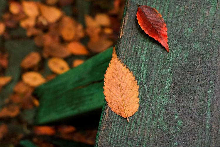 秋色 Autumn