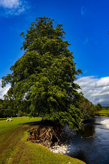 Tree by river against sky