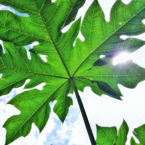 Leaf Green Color Growth Close-up Nature Freshness Day Outdoors Sky The Week On EyeEm