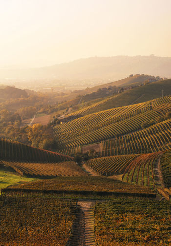 Landscape Environment Scenics - Nature Tranquil Scene Field Agriculture Rural Scene Tranquility Land Beauty In Nature Sky Nature Plant No People Growth Day Idyllic Farm Vineyard Outdoors Winemaking Rolling Landscape Langhe EyeEm Best Shots EyeEm Nature Lover