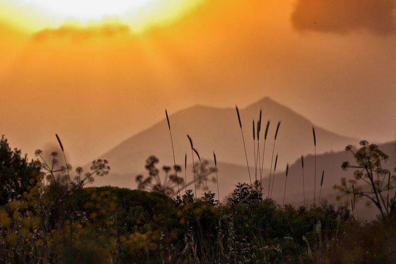 Mountaintops and vegetation from the temple of Poseidon. Sunset Plant Beauty In Nature Sky Growth Nature Tranquility No People Tranquil Scene Scenics - Nature Orange Color Cloud - Sky Tree Land Selective Focus Field Close-up Outdoors Landscape Silhouette Stalk Plant