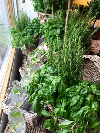Basil Beauty In Nature Green Green Color Growing Growth Leaf Nature Plant Potted Plant Rosemary Herb