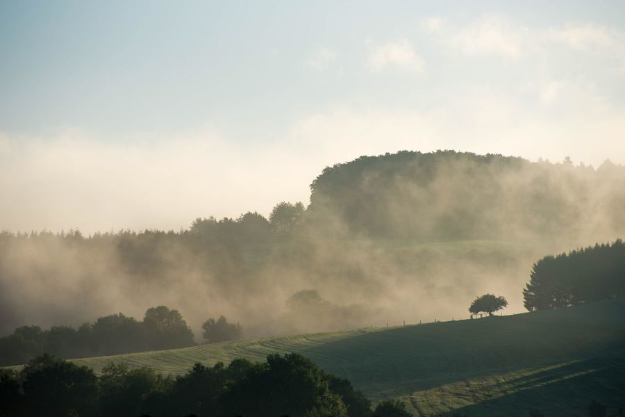 Perspectives On Nature Tree Nature Beauty In Nature Tranquility Tranquil Scene Scenics Landscape Idyllic Majestic Hazy  No People Mist Outdoors Fog Sky Day Forest Eifel Germany EyeEmNewHere