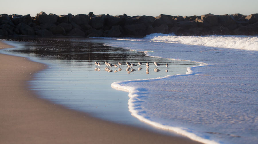 Beach Beauty In Nature Brids In The Surf Calm Coastline Horizon Over Water Idyllic Nature Ocean Outdoors Sand Sea Shore Tranquil Scene Tranquility Water Wave