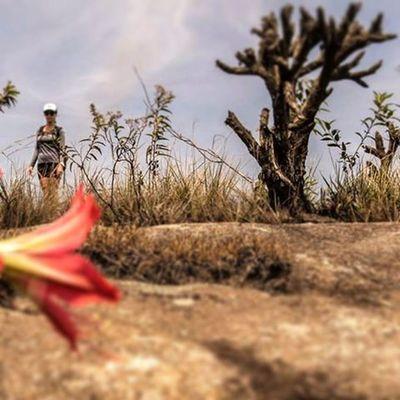 Perspectivas do mato... Varamato Flores Minasgerais Lavrasnovas Chapada Serra Montanha Ouropreto