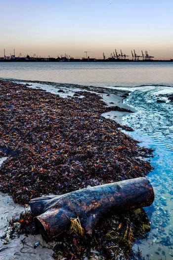 Industrial Skyline Kelp On Beach Beach Beauty In Nature Cold Temperature Day Nature No People Outdoors Sea Sky Sunset Water Winter