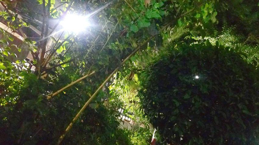 A Night light Ssclix SSClicks SSClickpix SSClickPics Ssclickx Mobilephotography Like Blackhole Bright Center Tree Leaves Tree Leaf Lens Flare Green Color
