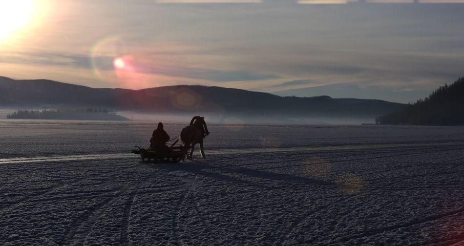 Horse Horse Sledding Ice Lake Outdoors Sledding Vacations Winter