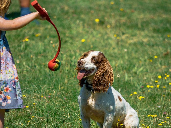 Pets Dog Grass