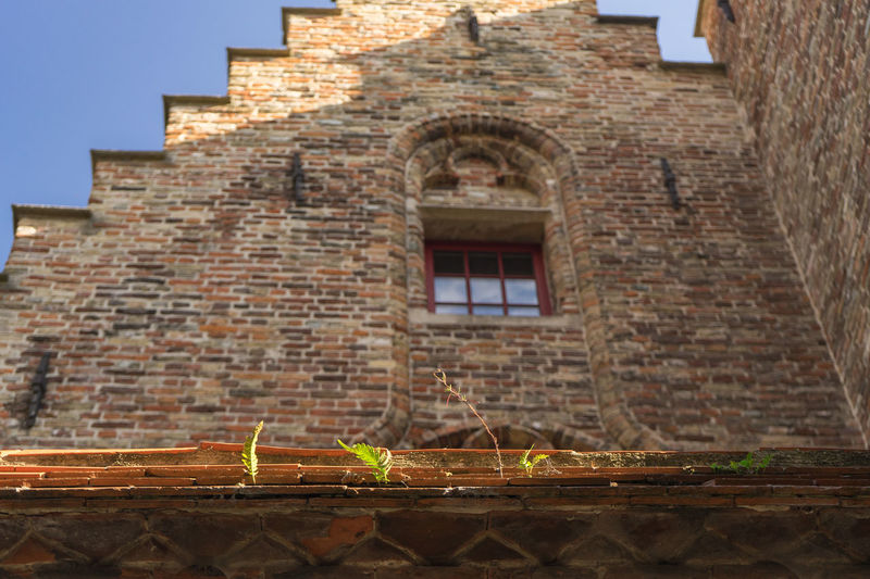 Architecture Architecture Architecture_collection Brick Wall Brugge Building Exterior Built Structure Day No People Onze Lieve Vrouw Onze Lieve Vrouwekathedraal Outdoors Plant Growing On The Stone Plant Growing Through Concrete Power Of Nature Sky Adapted To The City