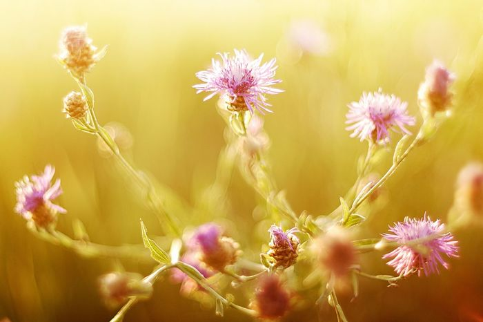 Nikon Rylsk Summer Sundown Nikonphotography Nature Flowers Beautiful From Russia With Love Space