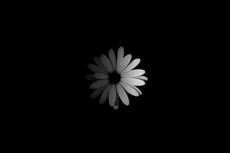 Flower in the dark Low Key Minimalism Flower Flowering Plant Vulnerability  Freshness Fragility Plant Beauty In Nature Flower Head Copy Space Black Background No People Nature