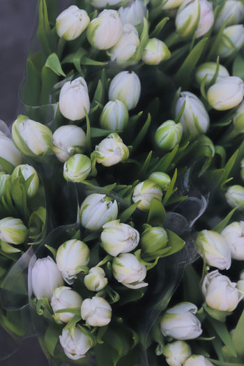Nature Tulips Beauty In Nature Beauty In Nature Botanical Close-up Day Floral Flourish Flower Flower Head Fragility Freshness Nature No People Outdoors Overhead View Plants And Flowers Spring Flowers Top Perspective Top View Wallpaper White Flower White Flowers White Tulips