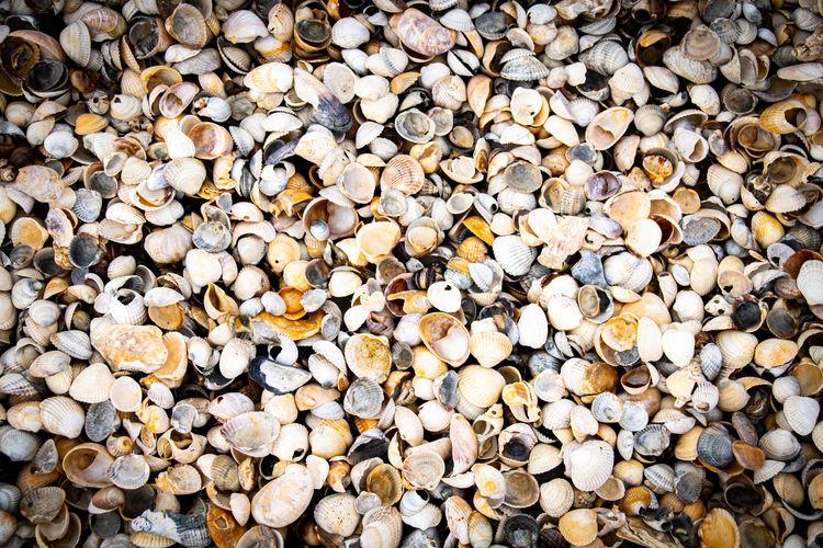 Overhead capture of sea shells