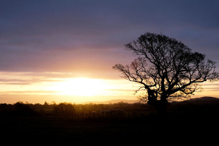 Lewes South Downs National Park Sky Sunset Tree Silhouette Scenics - Nature Beauty In Nature Tranquility Tranquil Scene Bare Tree Plant Field Cloud - Sky Landscape Orange Color Environment No People Land Nature Non-urban Scene Idyllic Outdoors Tree In Winter